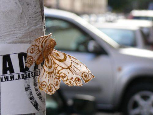 Schmetterling in Stockholm